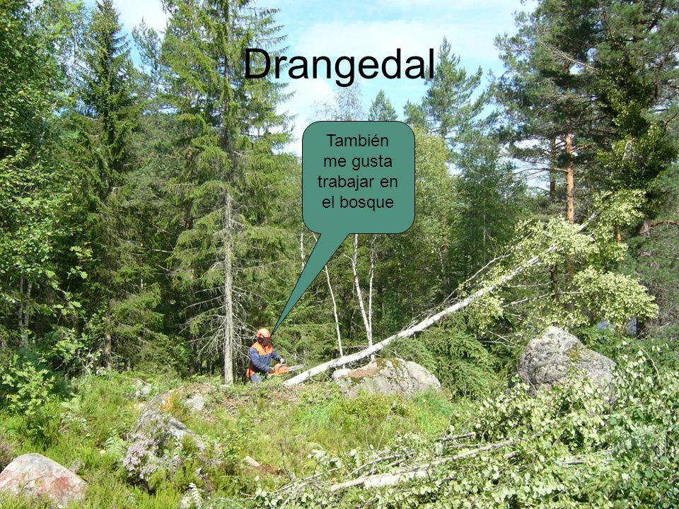 Drangedal También me gusta trabajar en el bosque