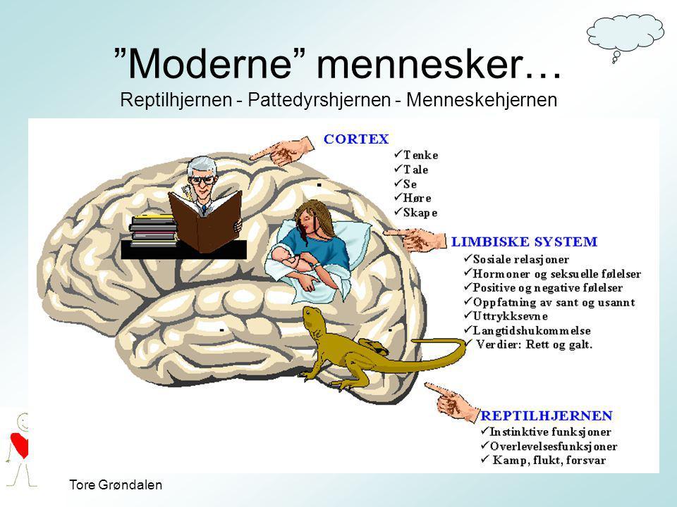 """Tore Grøndalen """"Moderne"""" mennesker… Reptilhjernen - Pattedyrshjernen - Menneskehjernen"""