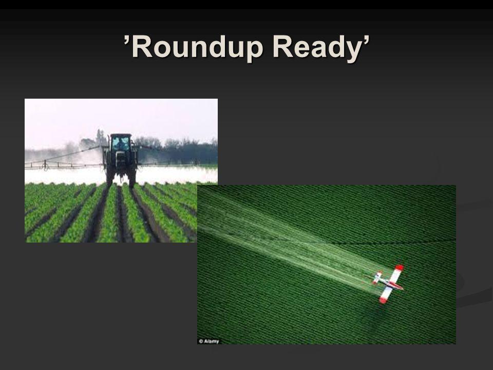 'Roundup Ready'