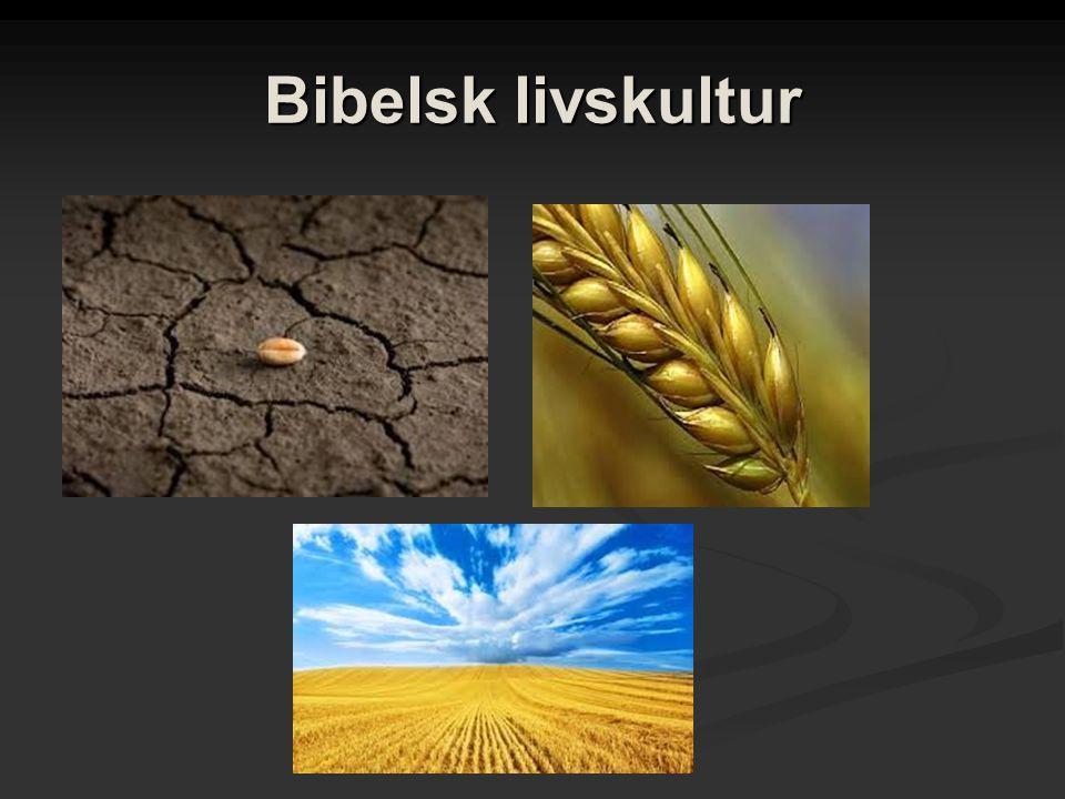 Bibelsk livskultur