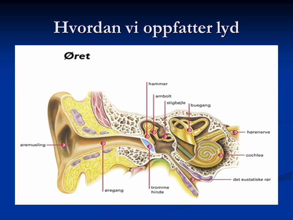 Ørepropp Plasser øreproppen riktig i øret (høyre-venstre) Plasser øreproppen riktig i øret (høyre-venstre) Ukentlig renhold (vask), øreproppen må da skilles fra apparatet.