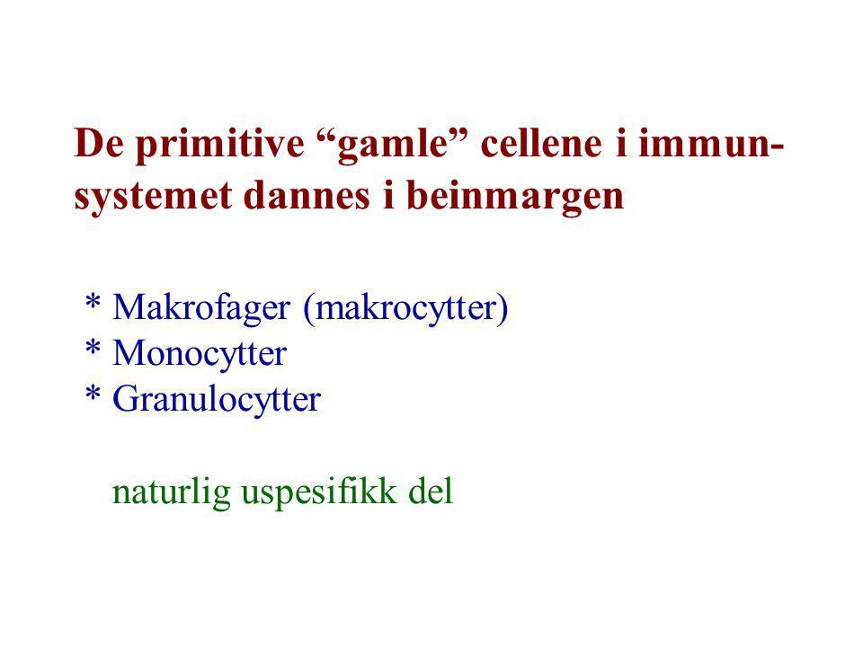 De primitive gamle cellene i immun- systemet dannes i beinmargen * Makrofager (makrocytter) * Monocytter * Granulocytter naturlig uspesifikk del