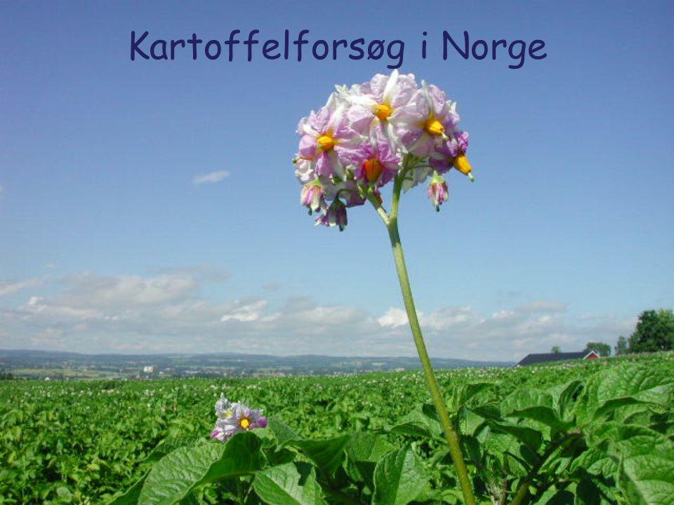 2 Potetforsøk i Norge av Halvor Alm Potetkoordinator – Landbrukets Forsøksringer (LFR) Fagforum Potet – Bioforsk + LFR