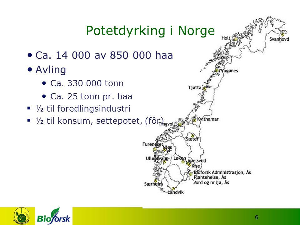 6 Potetdyrking i Norge Ca. 14 000 av 850 000 haa Avling Ca. 330 000 tonn Ca. 25 tonn pr. haa  ½ til foredlingsindustri  ½ til konsum, settepotet, (f