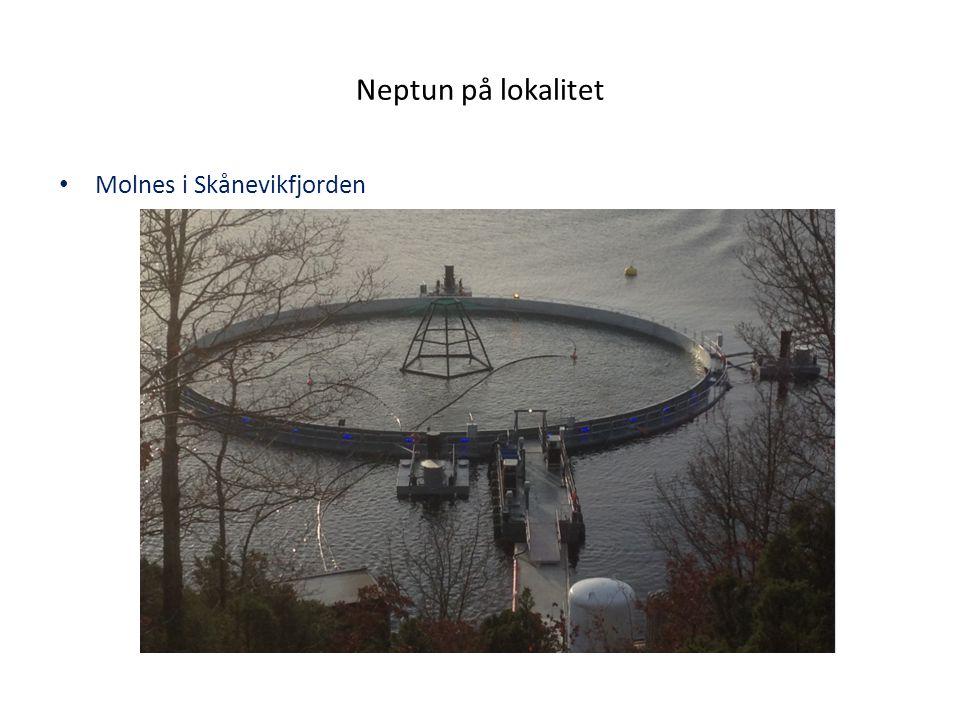 Teknologi Teknologi og prinsipp Neptun