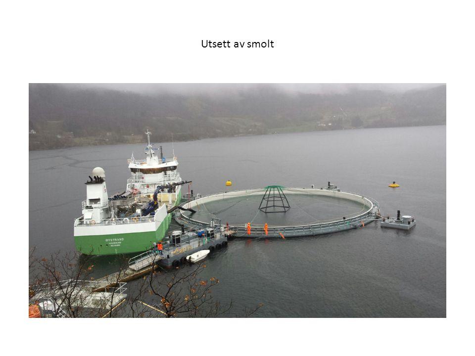 Sertifisering Produktsertifikat Neptun NS 9415 : 2009 ( Norsk Standard ) og NYTEK forskriften Anleggssertifikat ( Marine Harvest )