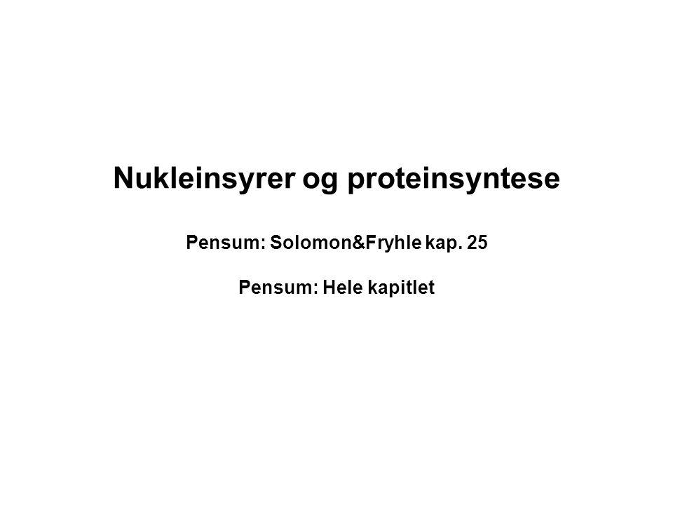 Nukleinsyrer og proteinsyntese Pensum: Solomon&Fryhle kap. 25 Pensum: Hele kapitlet