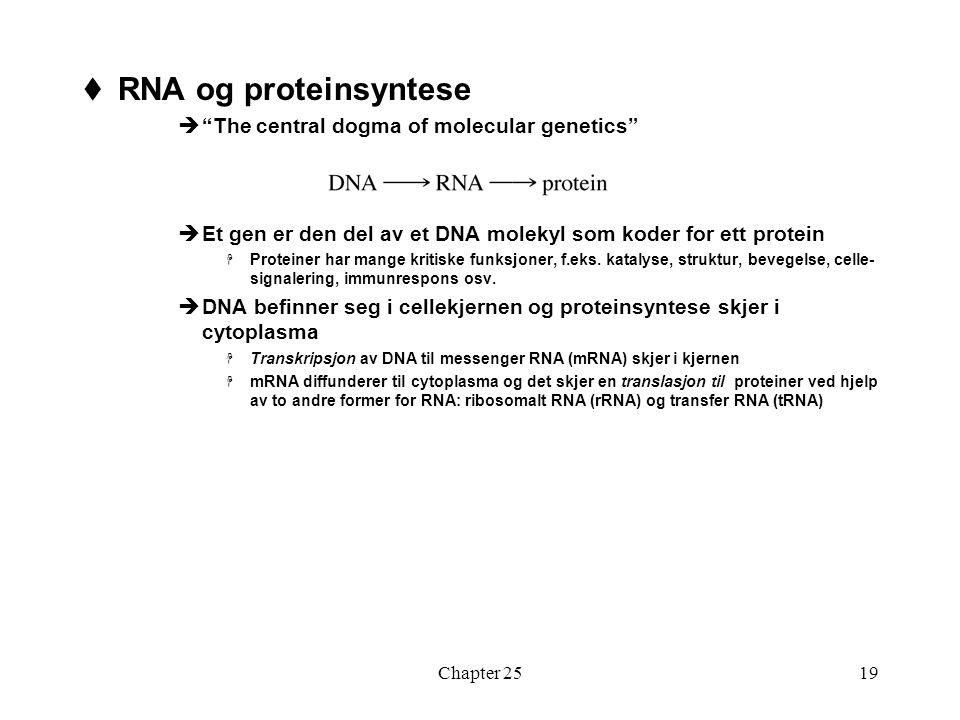 Chapter 2519  RNA og proteinsyntese  The central dogma of molecular genetics  Et gen er den del av et DNA molekyl som koder for ett protein  Proteiner har mange kritiske funksjoner, f.eks.