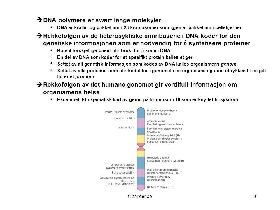 Chapter 253  DNA polymere er svært lange molekyler  DNA er krøllet og pakket inn i 23 kromosomer som igjen er pakket inn i cellekjernen  Rekkefølgen av de heterosykliske aminbasene i DNA koder for den genetiske informasjonen som er nødvendig for å syntetisere proteiner  Bare 4 forskjellige baser blir brukt for å kode i DNA  En del av DNA som koder for et spesifikt protein kalles et gen  Settet av all genetisk informasjon som kodes av DNA kalles organismens genom  Settet av alle proteiner som blir kodet for i genomet i en organisme og som uttrykkes til en gitt tid er et proteom  Rekkefølgen av det humane genomet gir verdifull informasjon om organismens helse  Eksempel: Et skjematisk kart av gener på kromosom 19 som er knyttet til sykdom