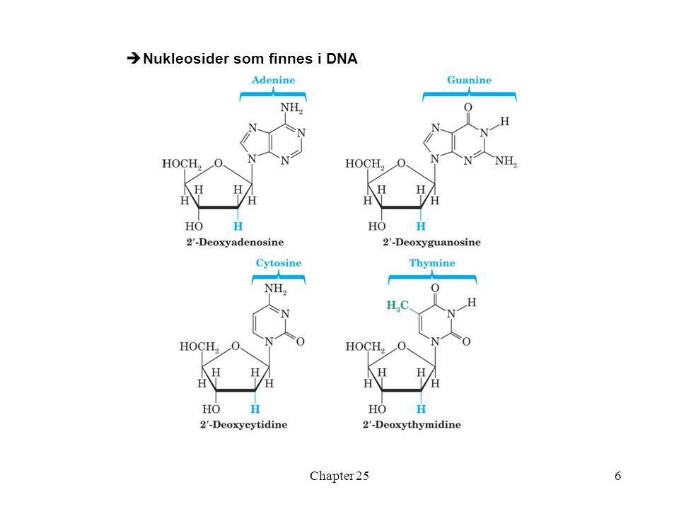 Chapter 256  Nukleosider som finnes i DNA
