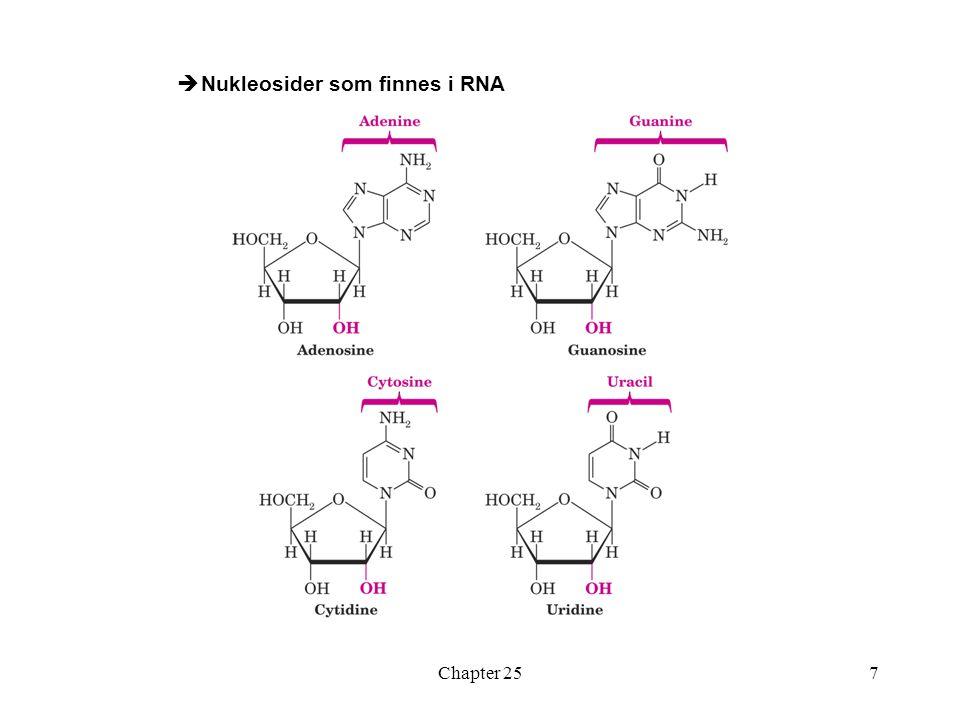 Chapter 257  Nukleosider som finnes i RNA