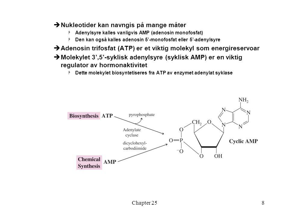 Chapter 258  Nukleotider kan navngis på mange måter  Adenylsyre kalles vanligvis AMP (adenosin monofosfat)  Den kan også kalles adenosin 5'-monofosfat eller 5'-adenylsyre  Adenosin trifosfat (ATP) er et viktig molekyl som energireservoar  Molekylet 3',5'-syklisk adenylsyre (syklisk AMP) er en viktig regulator av hormonaktivitet  Dette molekylet biosyntetiseres fra ATP av enzymet adenylat syklase