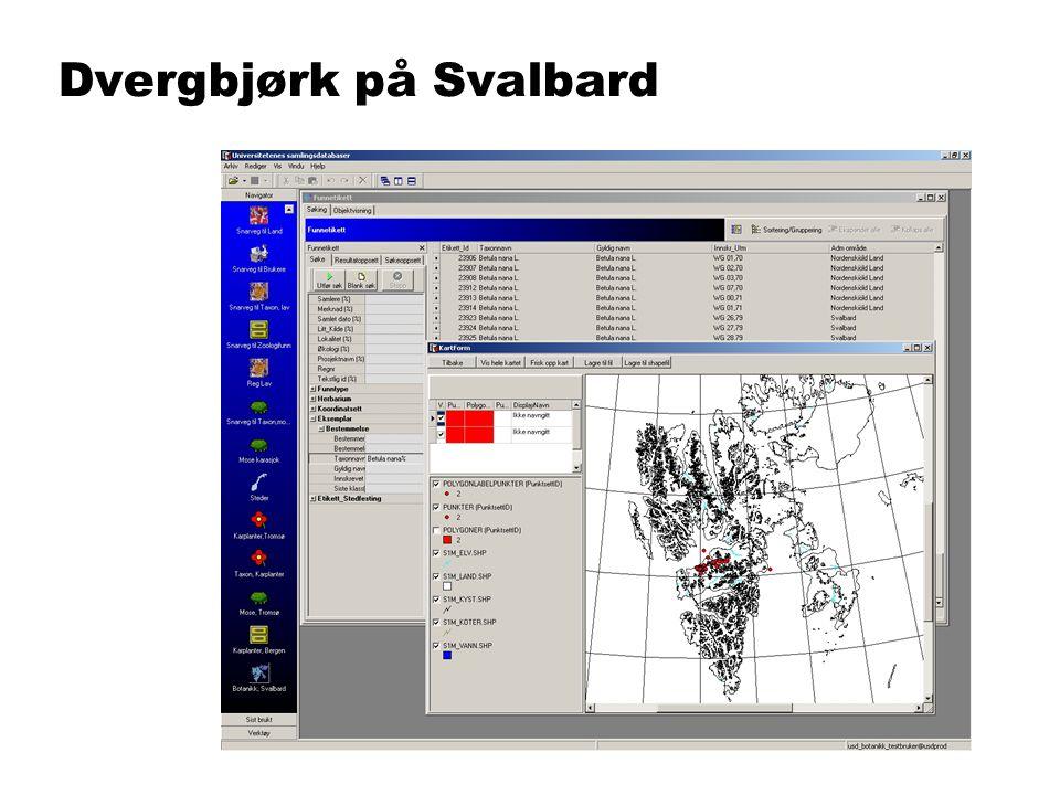 Dvergbjørk på Svalbard
