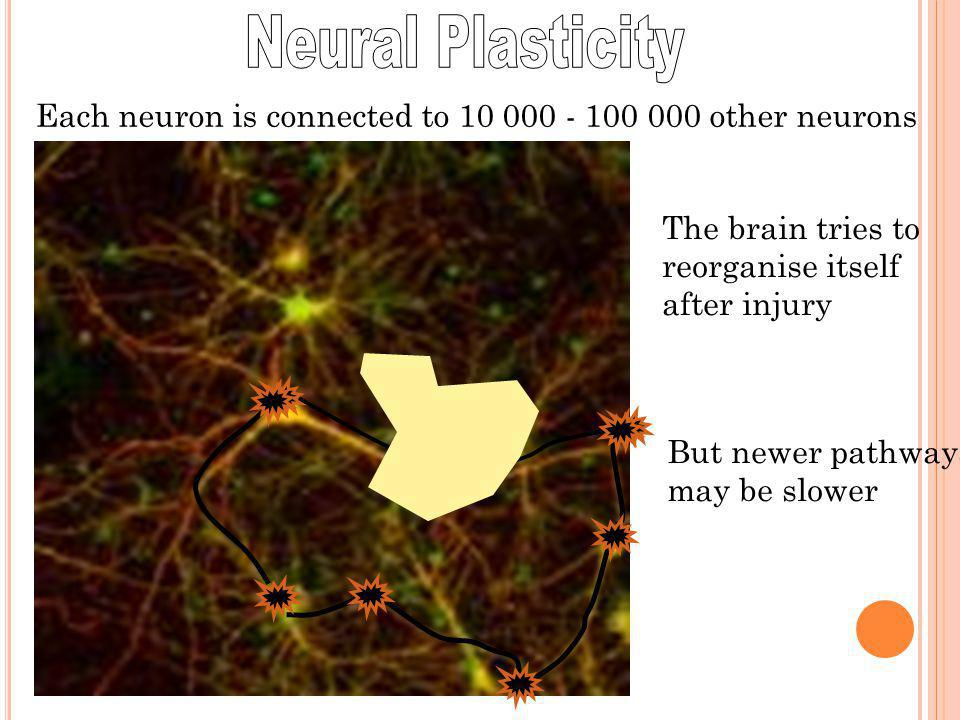 Each neuron is connected to 10 000 - 100 000 other neurons The brain tries to reorganise itself after injury But newer pathways may be slower