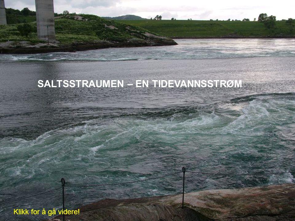 SALTSSTRAUMEN – EN TIDEVANNSSTRØM Klikk for å gå videre!