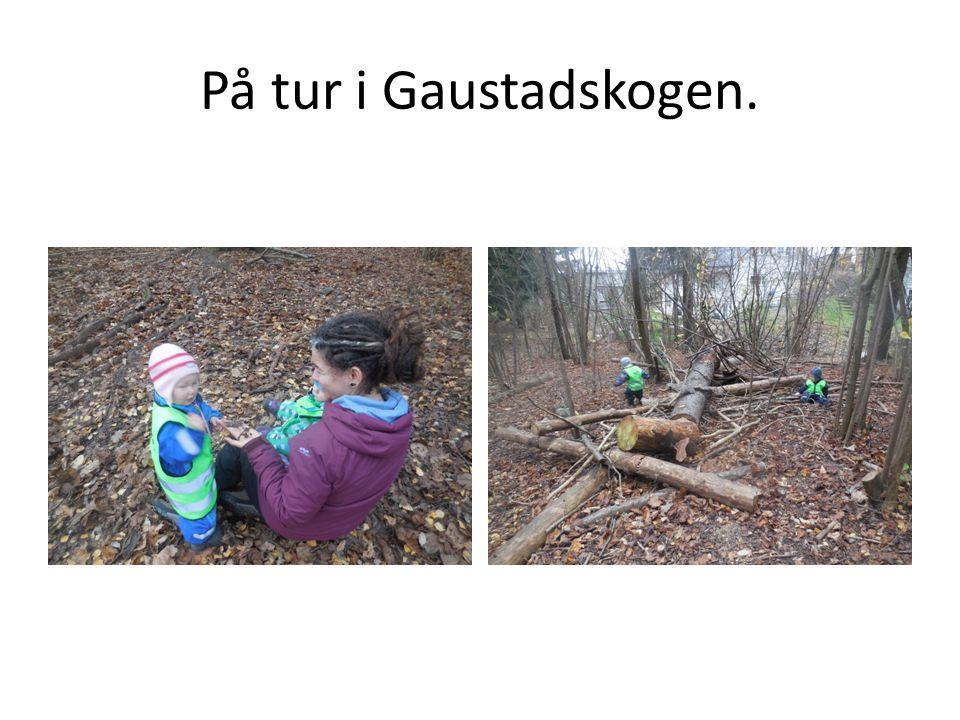 På tur i Gaustadskogen.