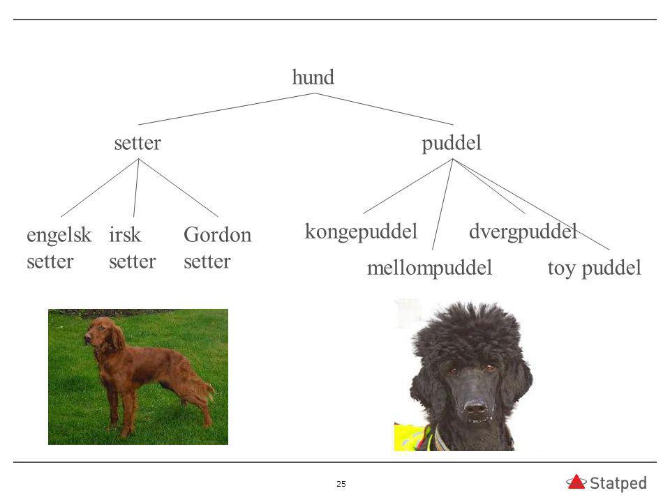 25 hund setterpuddel engelsk setter irsk setter Gordon setter kongepuddel mellompuddel dvergpuddel toy puddel