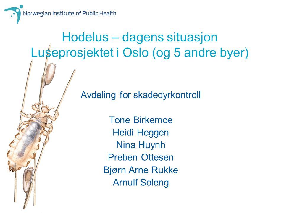 Hodelus – dagens situasjon Luseprosjektet i Oslo (og 5 andre byer) Avdeling for skadedyrkontroll Tone Birkemoe Heidi Heggen Nina Huynh Preben Ottesen