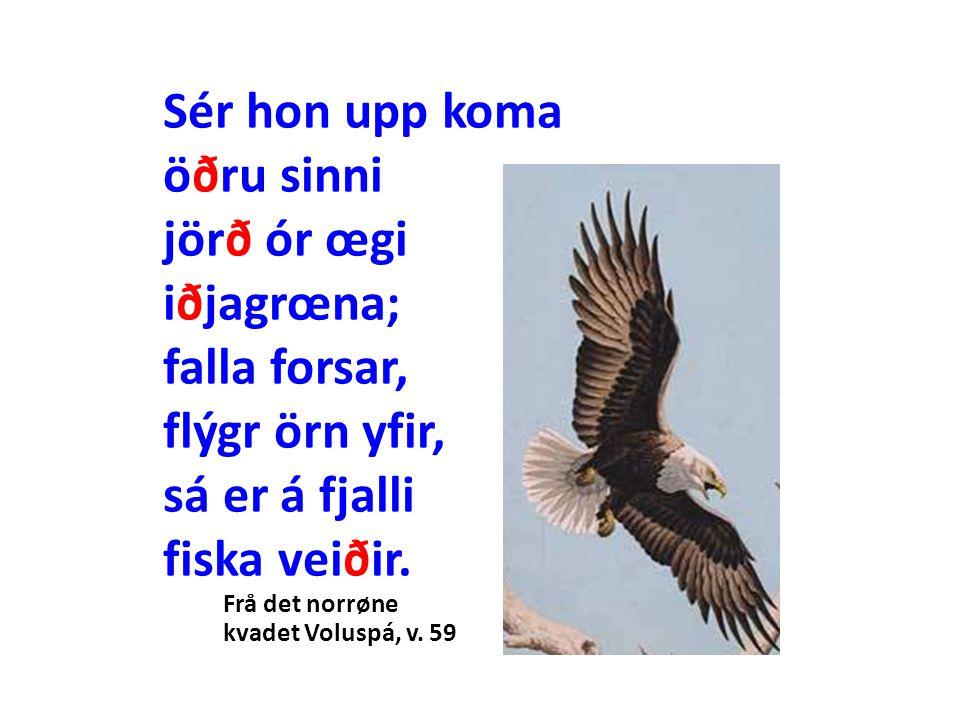 Sér hon upp koma öðru sinni jörð ór œgi iðjagrœna; falla forsar, flýgr örn yfir, sá er á fjalli fiska veiðir. Frå det norrøne kvadet Voluspá, v. 59