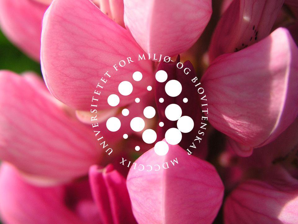 UNIVERSITETET FOR MILJØ- OG BIOVITENSKAP www.umb.no Kompetanse for innovasjon 12 Bygg til mat (forts) Resultater  Evalueringen er ikke avsluttet enda.