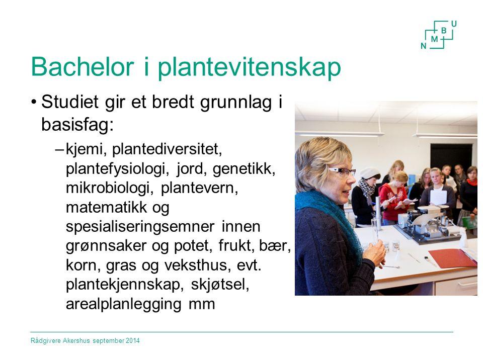 Bachelor i plantevitenskap Studiet gir et bredt grunnlag i basisfag: –kjemi, plantediversitet, plantefysiologi, jord, genetikk, mikrobiologi, planteve