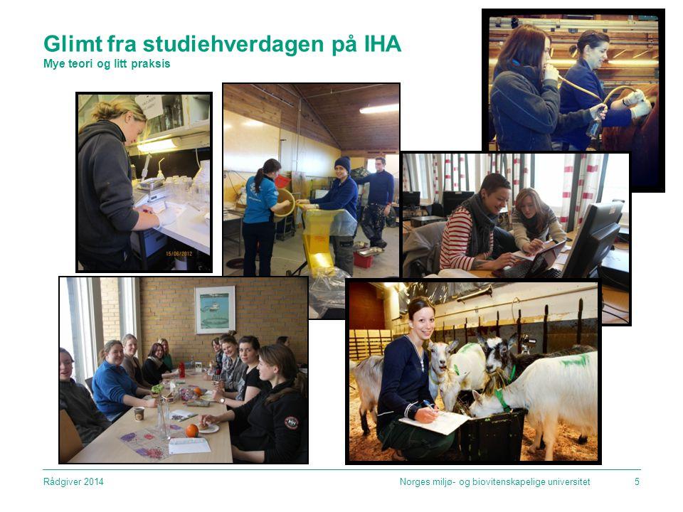 Glimt fra studiehverdagen på IHA Mye teori og litt praksis Norges miljø- og biovitenskapelige universitet5Rådgiver 2014