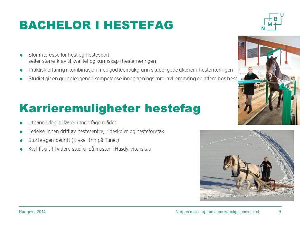 BACHELOR I HESTEFAG Norges miljø- og biovitenskapelige universitet9  Stor interesse for hest og hestesport setter større krav til kvalitet og kunnskap i hestenæringen  Praktisk erfaring i kombinasjon med god teoribakgrunn skaper gode aktører i hestenæringen  Studiet gir en grunnleggende kompetanse innen treningslære, avl, ernæring og atferd hos hest Karrieremuligheter hestefag  Utdanne deg til lærer innen fagområdet  Ledelse innen drift av hestesentre, rideskoler og hesteforetak  Starte egen bedrift (f.