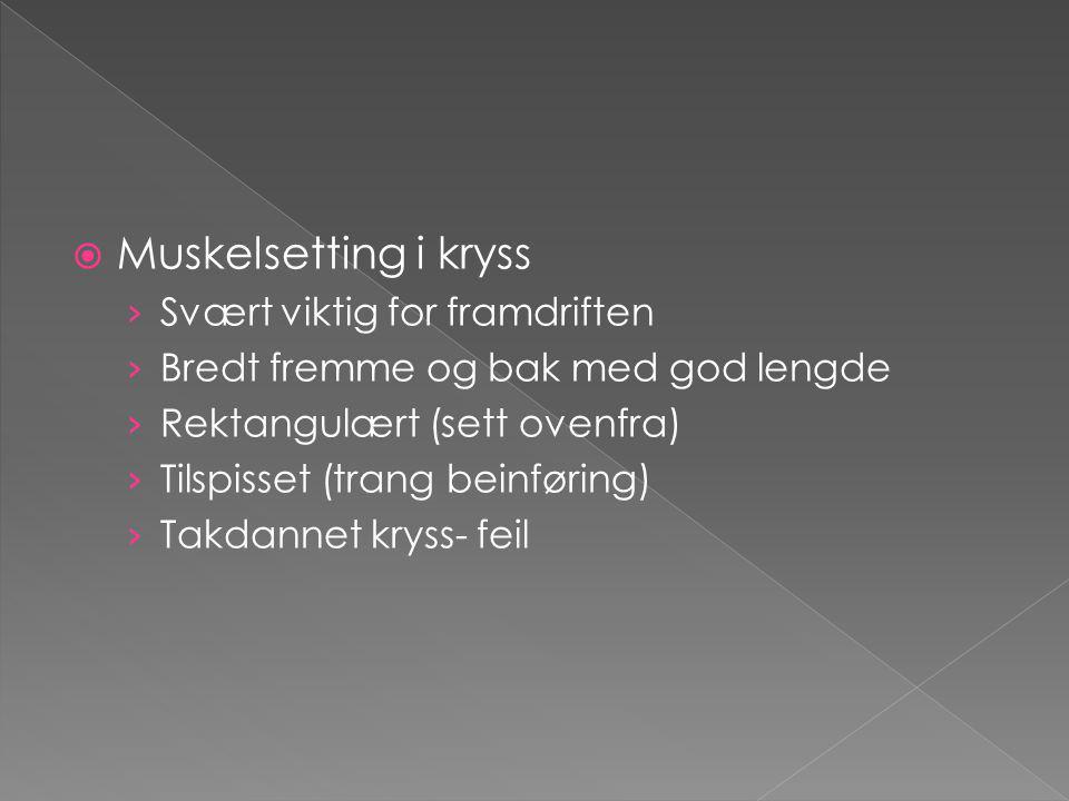  Muskelsetting i kryss › Svært viktig for framdriften › Bredt fremme og bak med god lengde › Rektangulært (sett ovenfra) › Tilspisset (trang beinføri