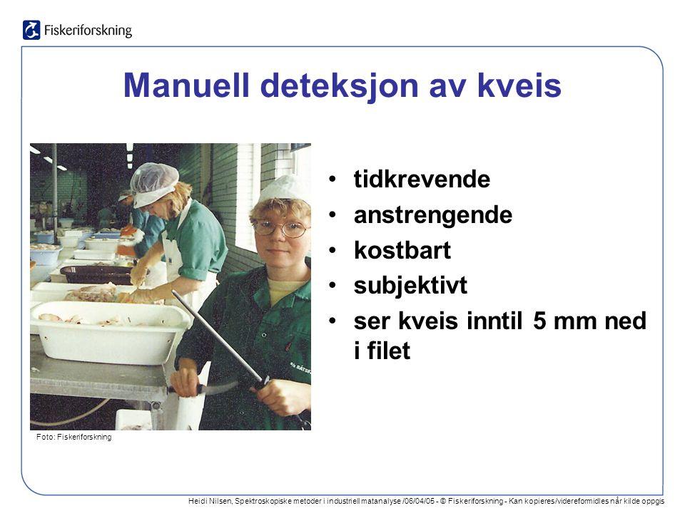 Heidi Nilsen, Spektroskopiske metoder i industriell matanalyse /06/04/05 - © Fiskeriforskning - Kan kopieres/videreformidles når kilde oppgis Manuell deteksjon av kveis tidkrevende anstrengende kostbart subjektivt ser kveis inntil 5 mm ned i filet Foto: Fiskeriforskning