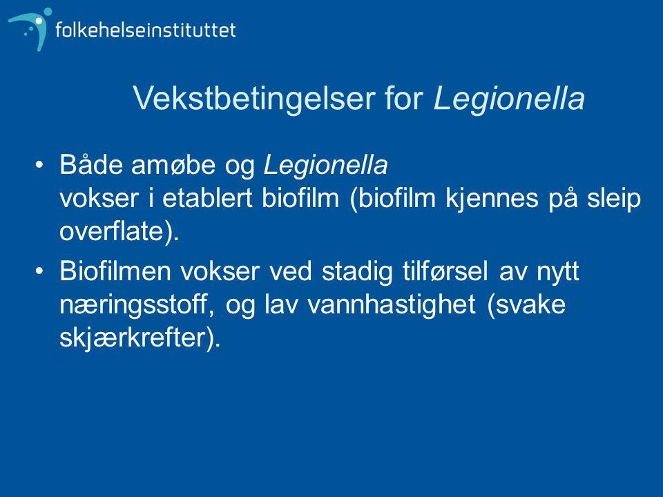 Vekstbetingelser for Legionella Både amøbe og Legionella vokser i etablert biofilm (biofilm kjennes på sleip overflate). Biofilmen vokser ved stadig t