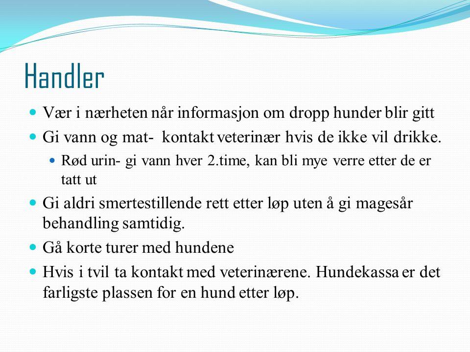 Handler Vær i nærheten når informasjon om dropp hunder blir gitt Gi vann og mat- kontakt veterinær hvis de ikke vil drikke. Rød urin- gi vann hver 2.t