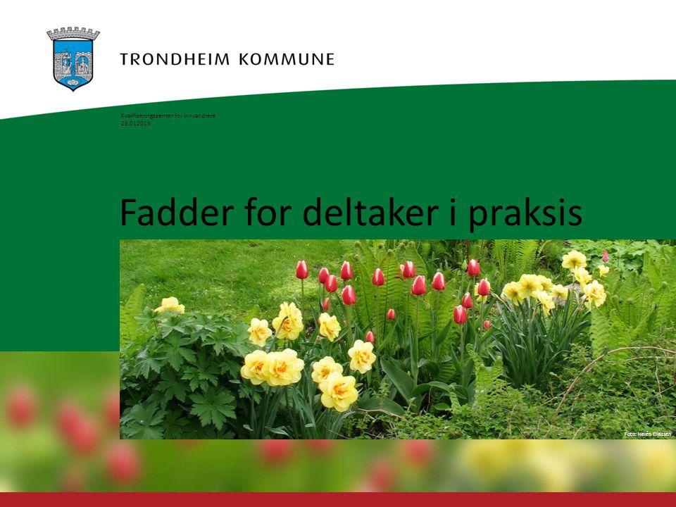Foto: Geir Hageskal Foto: Helén Eliassen Fadder for deltaker i praksis Kvalifiseringssenter for innvandrere 23.012013