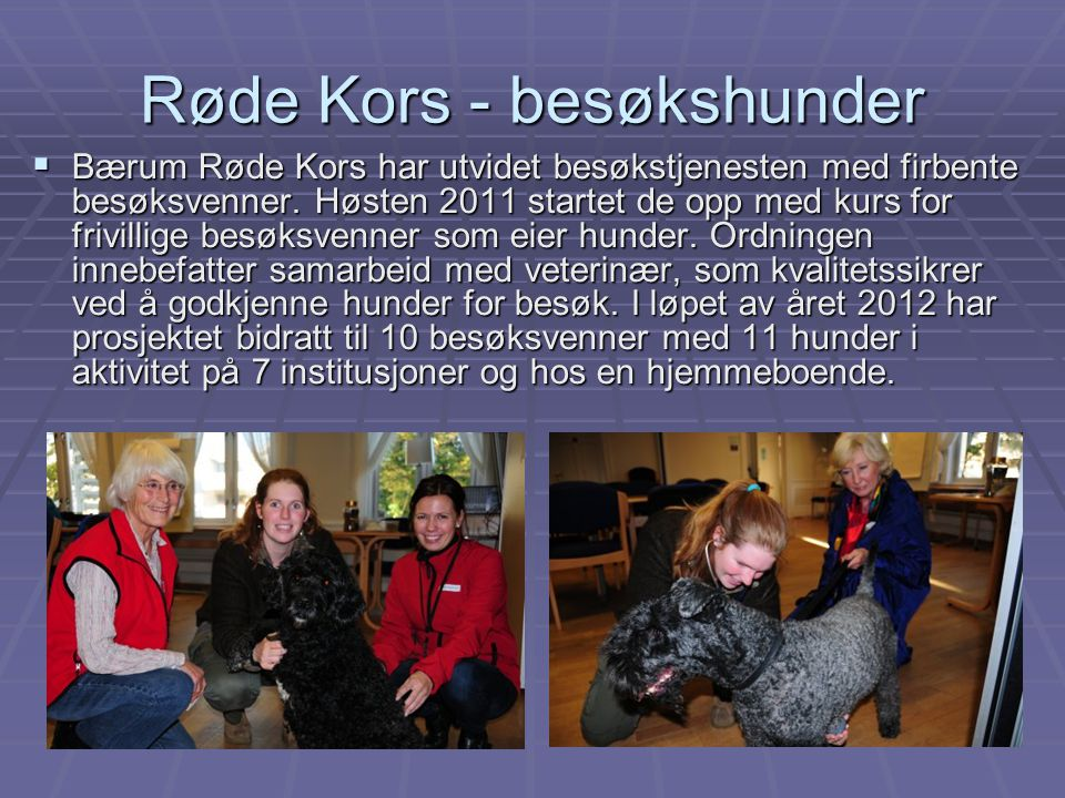 Røde Kors - besøkshunder  Bærum Røde Kors har utvidet besøkstjenesten med firbente besøksvenner. Høsten 2011 startet de opp med kurs for frivillige b