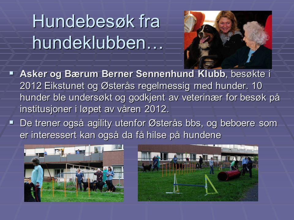 Hundebesøk fra hundeklubben…  Asker og Bærum Berner Sennenhund Klubb, besøkte i 2012 Eikstunet og Østerås regelmessig med hunder. 10 hunder ble under