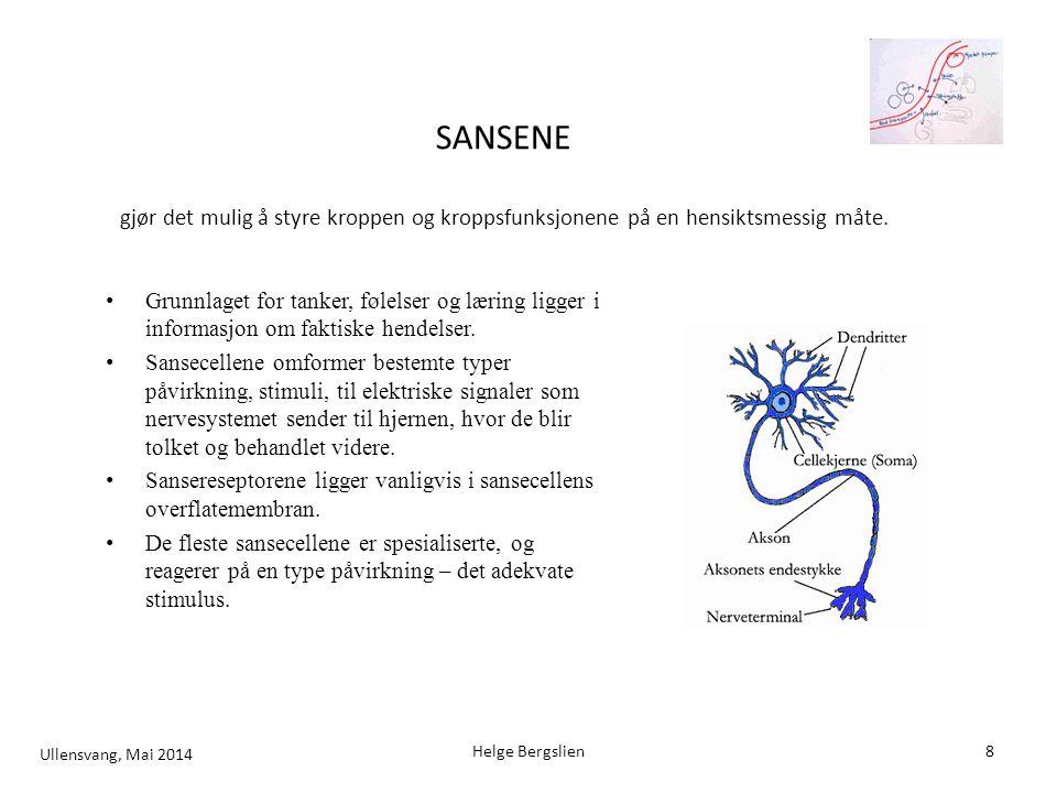 Smak og luktemolekyler stimulerer receptorene i membranen på sansecellen.