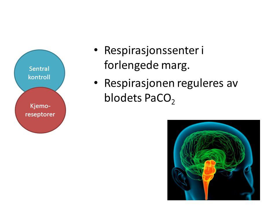 Respirasjonssenter i forlengede marg. Respirasjonen reguleres av blodets PaCO 2 Sentral kontroll Kjemo- reseptorer