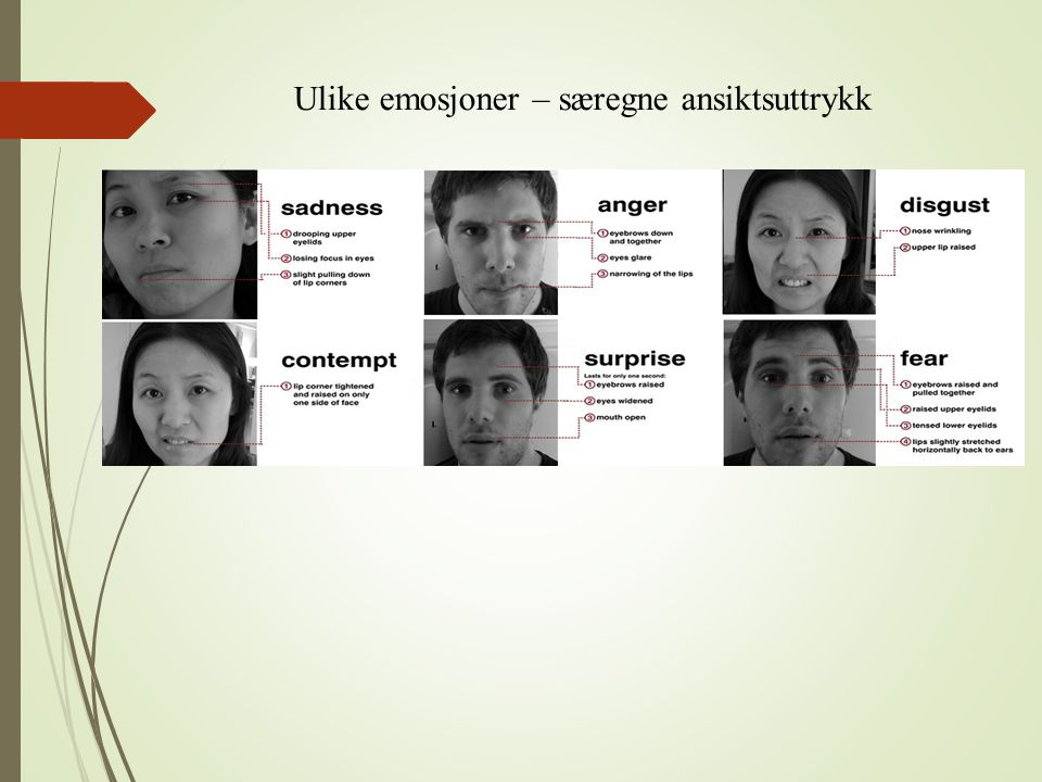 Facial feedback-hypotesen (Ekman) Sensorisk feedback fra ansiktsmuskler  emosjonell opplevelse We may smile because we are happy, but we are also happy because we are smiling.