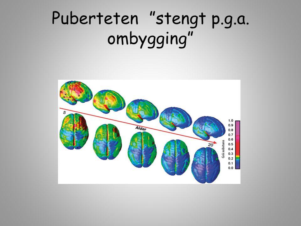 """Puberteten """"stengt p.g.a. ombygging"""""""