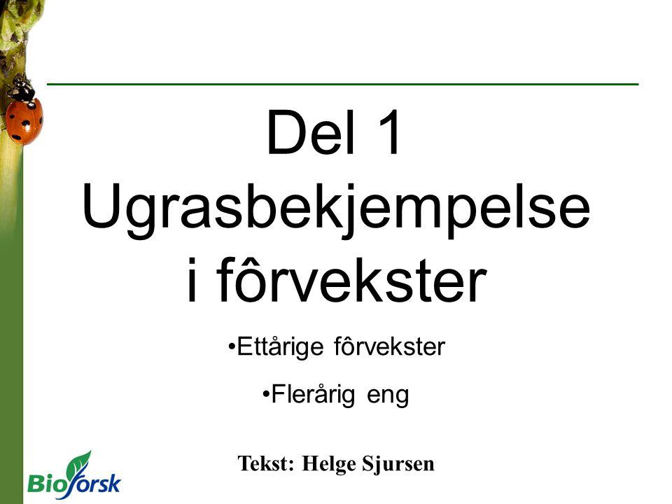 Del 1 Ugrasbekjempelse i fôrvekster Ettårige fôrvekster Flerårig eng Tekst: Helge Sjursen