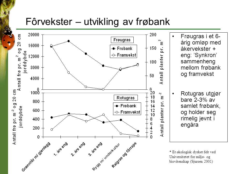 Fôrvekster – utvikling av frøbank * Et økologisk dyrket felt ved Universitetet for miljø- og biovitenskap (Sjursen 2001) Frøugras i et 6- årig omløp m