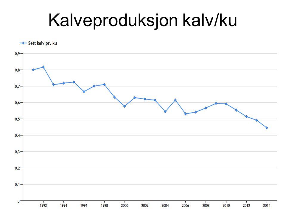 Kalveproduksjon kalv/ku