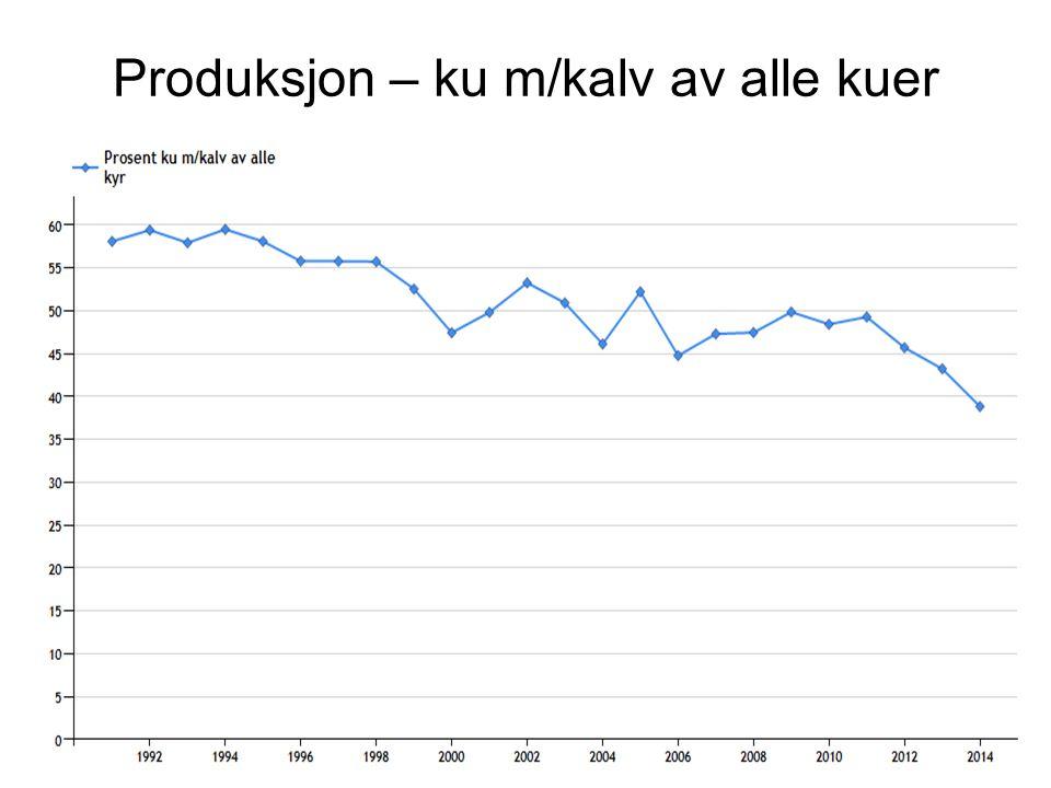 Produksjon – ku m/kalv av alle kuer