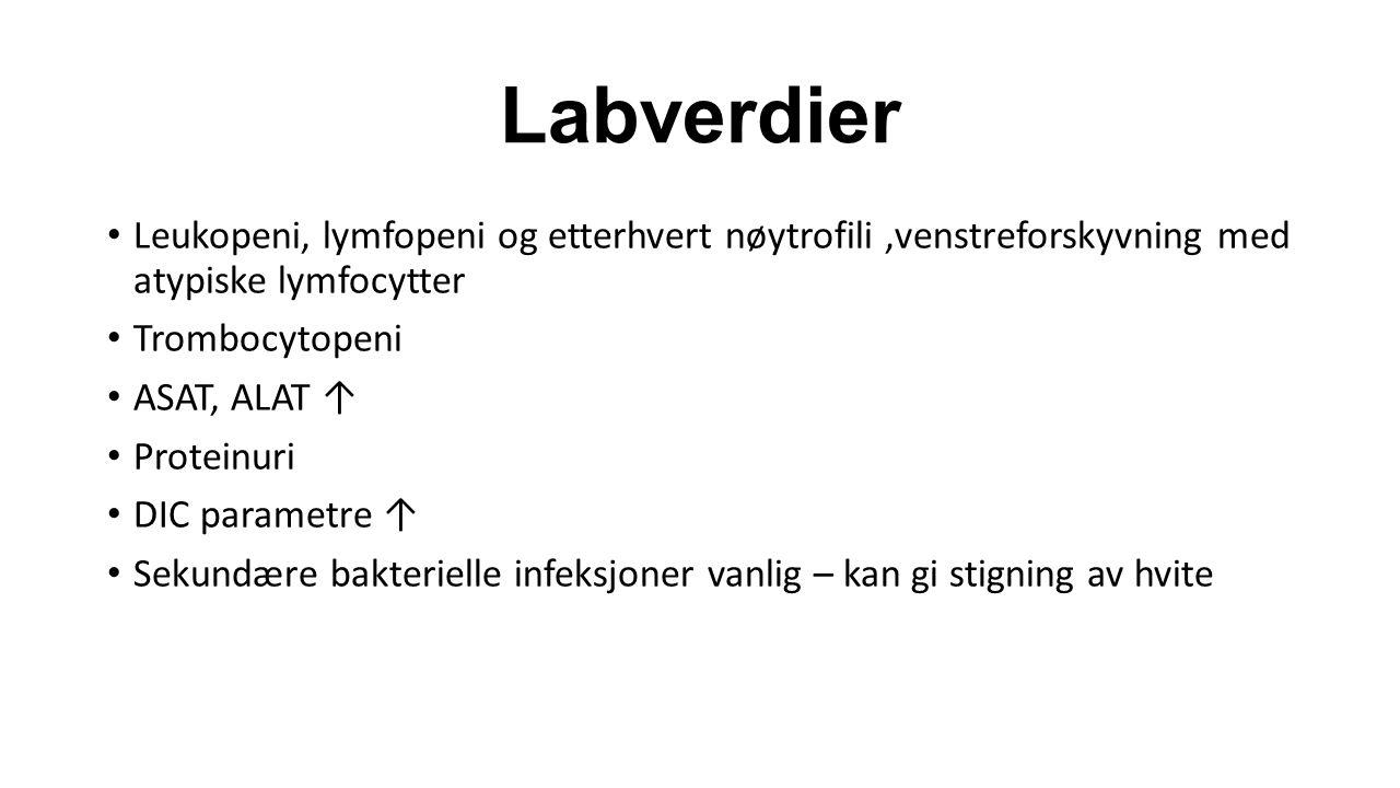 Labverdier Leukopeni, lymfopeni og etterhvert nøytrofili,venstreforskyvning med atypiske lymfocytter Trombocytopeni ASAT, ALAT ↑ Proteinuri DIC parame