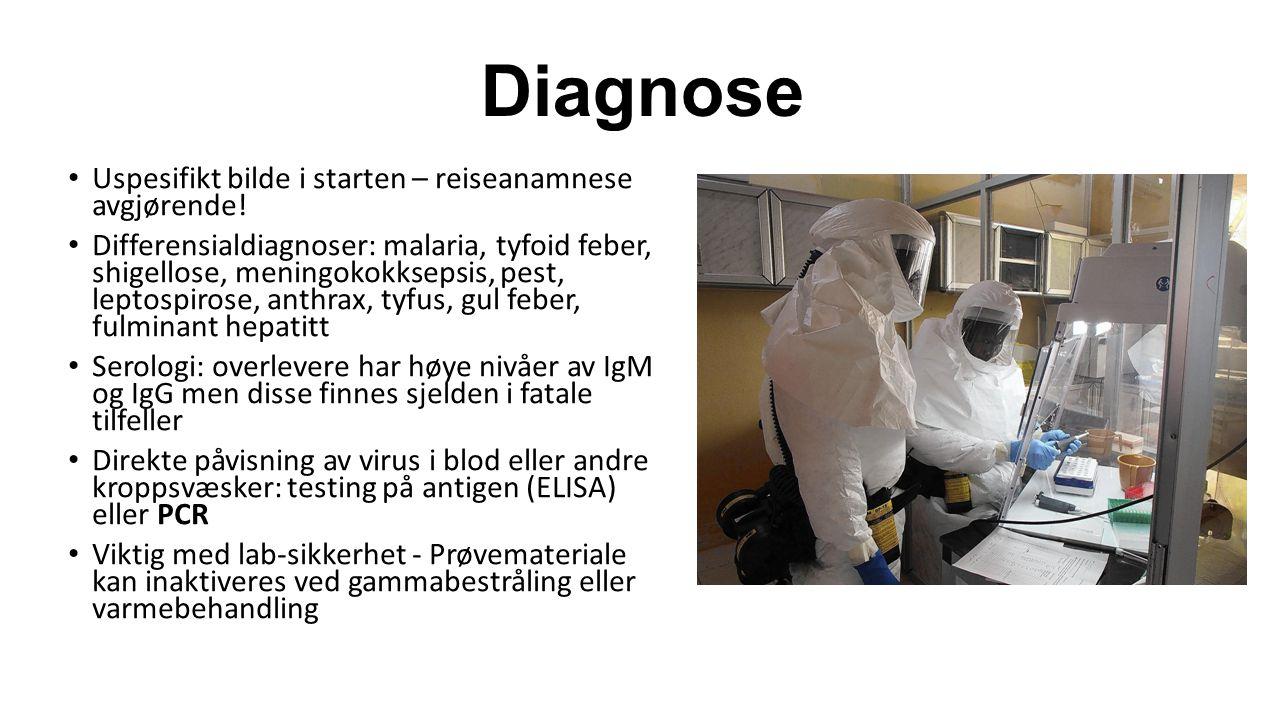 Diagnose Uspesifikt bilde i starten – reiseanamnese avgjørende! Differensialdiagnoser: malaria, tyfoid feber, shigellose, meningokokksepsis, pest, lep