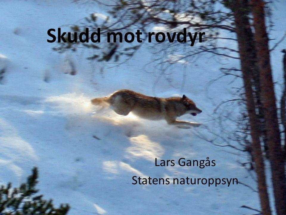 Skudd mot rovdyr Lars Gangås Statens naturoppsyn