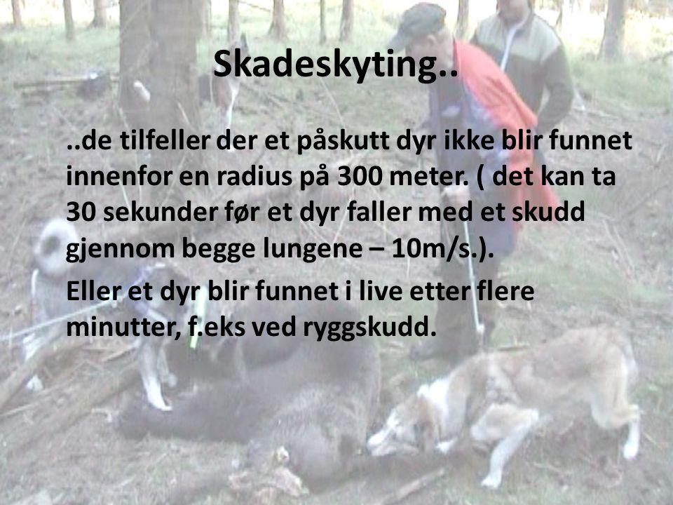 Skadeskyting....de tilfeller der et påskutt dyr ikke blir funnet innenfor en radius på 300 meter. ( det kan ta 30 sekunder før et dyr faller med et sk
