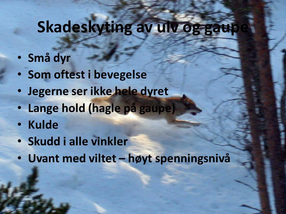 Skadeskyting av ulv og gaupe Små dyr Som oftest i bevegelse Jegerne ser ikke hele dyret Lange hold (hagle på gaupe) Kulde Skudd i alle vinkler Uvant m