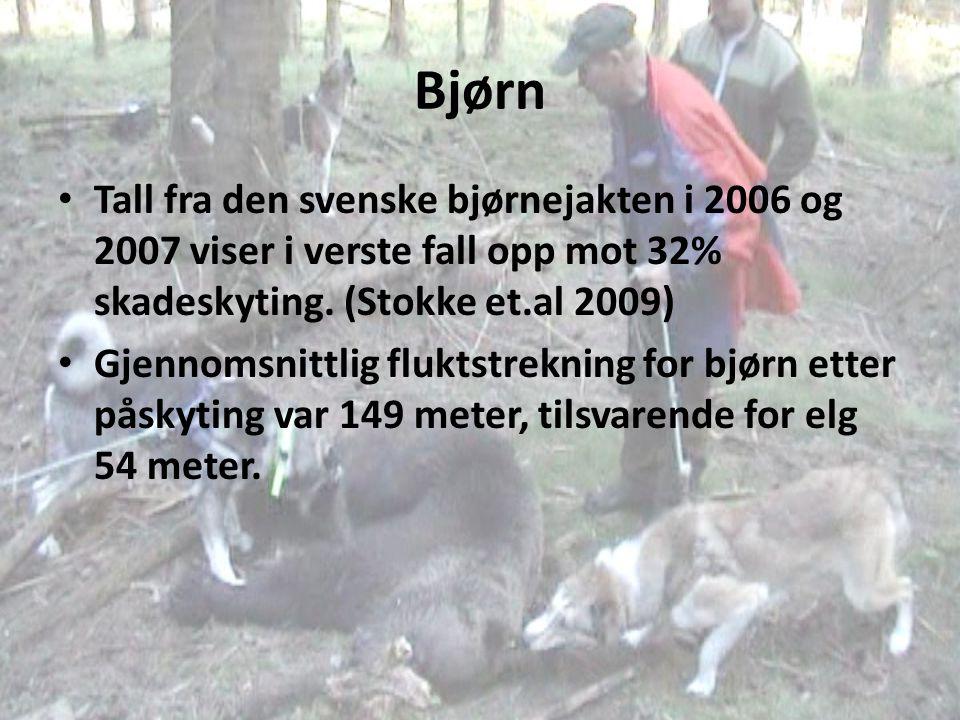 Bjørn Tall fra den svenske bjørnejakten i 2006 og 2007 viser i verste fall opp mot 32% skadeskyting. (Stokke et.al 2009) Gjennomsnittlig fluktstreknin