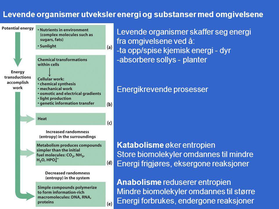 Levende organismer utveksler energi og substanser med omgivelsene Levende organismer skaffer seg energi fra omgivelsene ved å: -ta opp/spise kjemisk energi - dyr -absorbere sollys - planter Energikrevende prosesser Katabolisme øker entropien Store biomolekyler omdannes til mindre Energi frigjøres, eksergone reaksjoner Anabolisme reduserer entropien Mindre biomolekyler omdannes til større Energi forbrukes, endergone reaksjoner