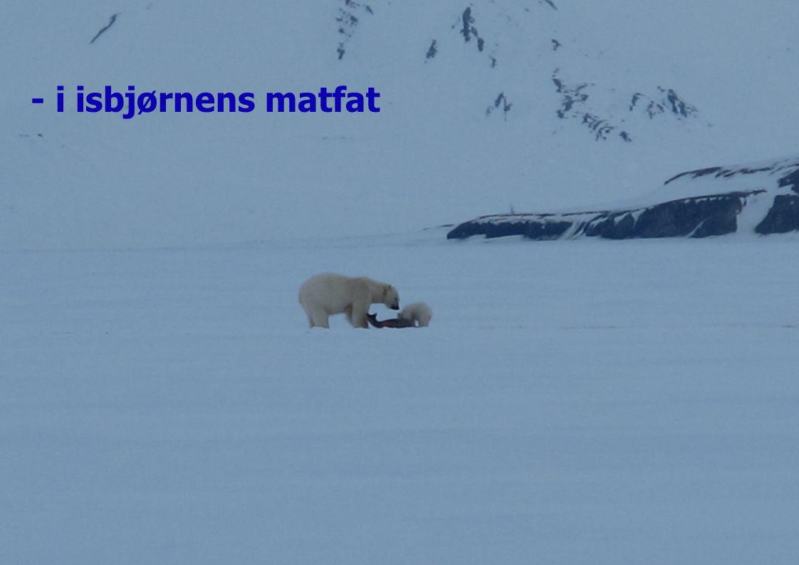 - i isbjørnens matfat
